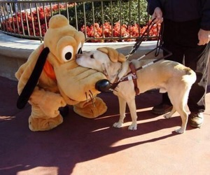 dog, cute, and pluto image