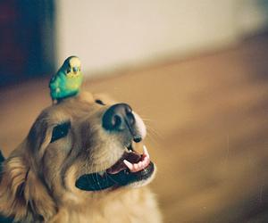 dog, cute, and bird image