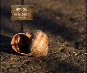 house, snail, and funny image