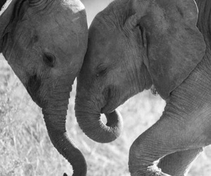 animals, baby, and blackandwhite image