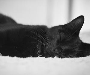 black, cat, and sleep image