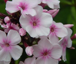 Coolpix, flower, and flowers image