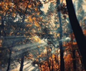 nature, autumn, and forest image