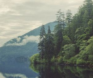 nature, landscape, and forest image