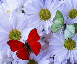 butterflies, flowers, and simply beautiful image