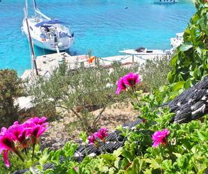 Croatia, flowers, and green image