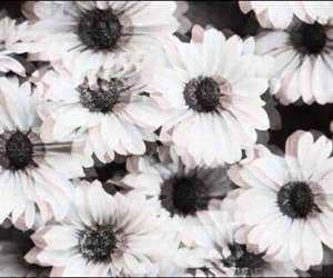 flowers, black and white, and black image