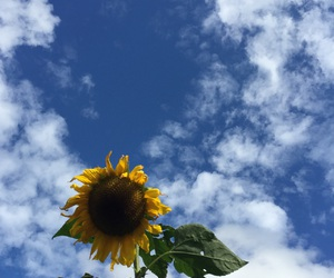 sky, sunflower, and blue image