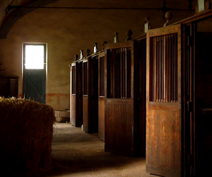 boxes, equestrian, and horse image