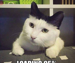 funny, loading, and cat image