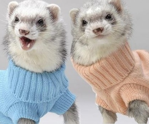 ferret, animal, and funny image