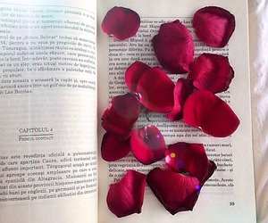 book, petals, and red image
