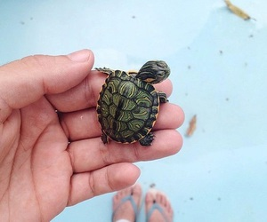 turtle, animal, and cute image