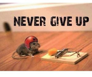 quote, mouse, and never image