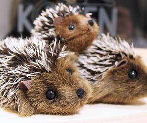 adorable, hedgehog, and kawaii image