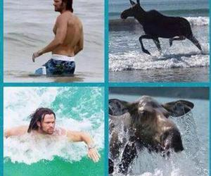moose and supernatural image
