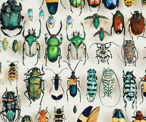 insects image