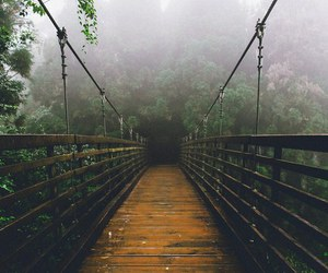 travel, bridge, and nature image