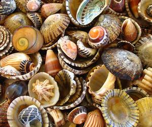 shell, sea, and summer image