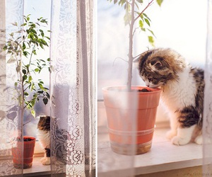 animals, cat, and inspiration image