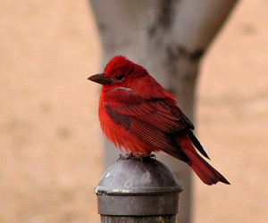 animal, fauna, and red image