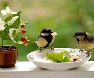bird, feelings, and together forever image