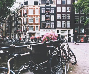 amsterdam, bike, and flowers image