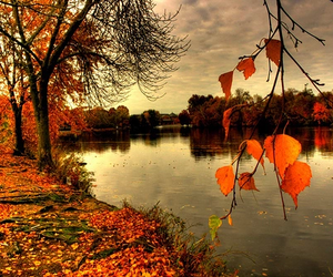 autumn, fall, and pretty image