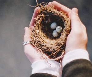 bird, eggs, and vintage image