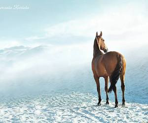 cheval, chevaux, and horse image