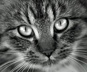 cat, photo, and photography image