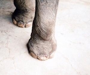 animals, elephant, and beautiful image