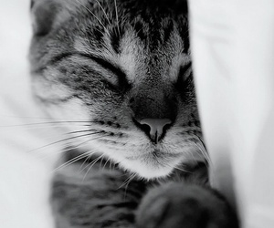 animal, sleep, and cute image