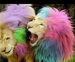 color, colorful, and lions image