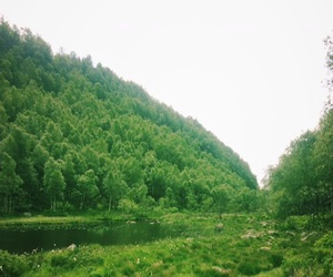 beautiful, woods, and mountain image
