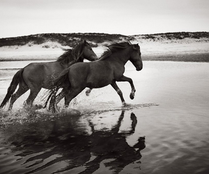 horse and beach image