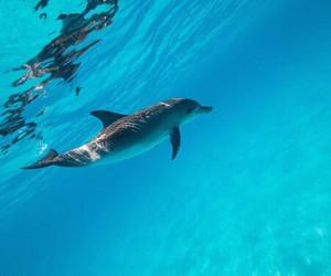 animal, lake, and ocean image