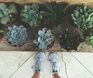 cactus, indie, and plants image