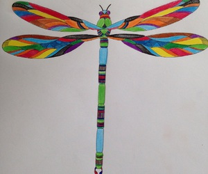 bright, colourful, and dragonfly image