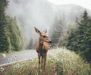 nature, animal, and deer image