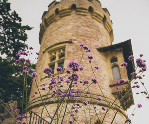 flowers and tower image
