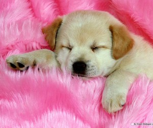 dog, puppy, and pink image