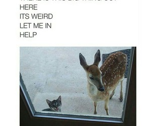 cat, deer, and funny image