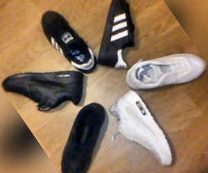 adidas, black, and trainers image