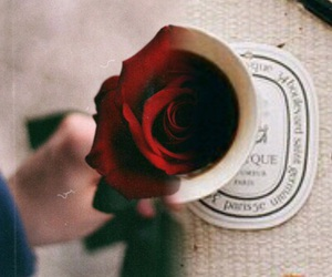 red, rose, and قهوة image