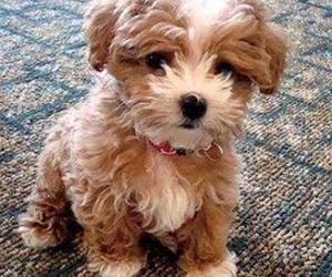 puppies image