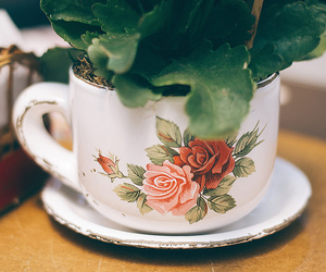 photography, plant, and teacup image