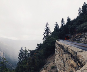 nature, trees, and road image