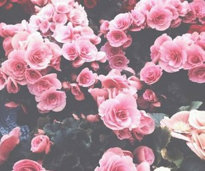 pink, flovers, and beautiful image