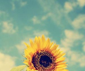 sunflower, flower, and sky image